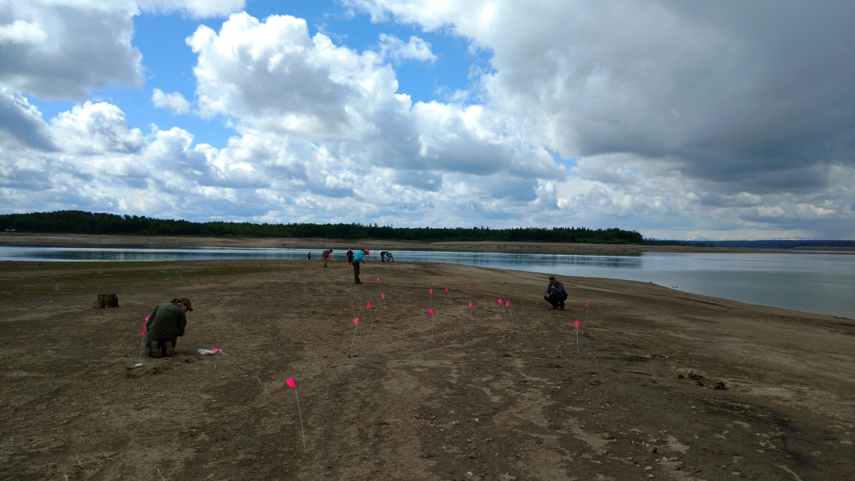 Public Archaeology at the Brazeau Reservoir