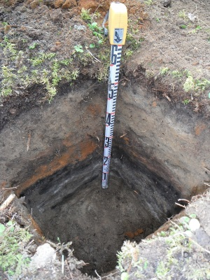 Thick charcoal deposits from a shovel test