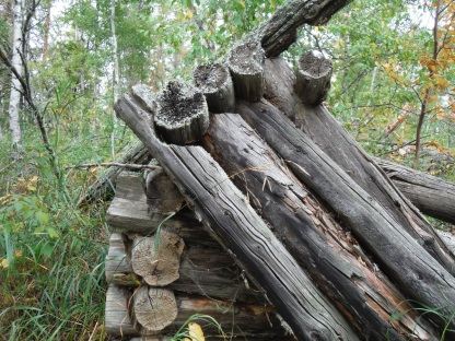 Chainsaw-cut cabin logs