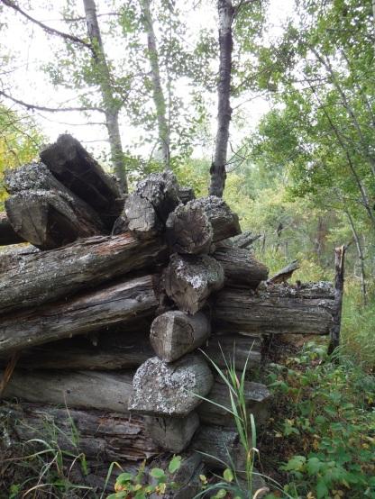Axe cut cabin logs