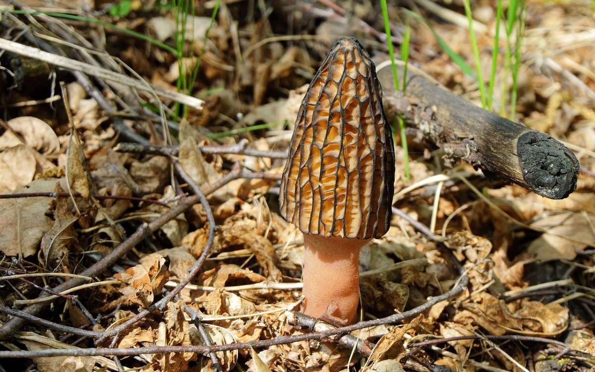 Edible Plant Series – Wild Mushrooms